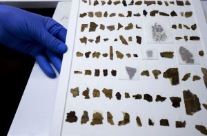 Rollos_del_Mar_Muerto-digitalizacion-arqueologia-Israel_LNCIMA20160223_0075_5